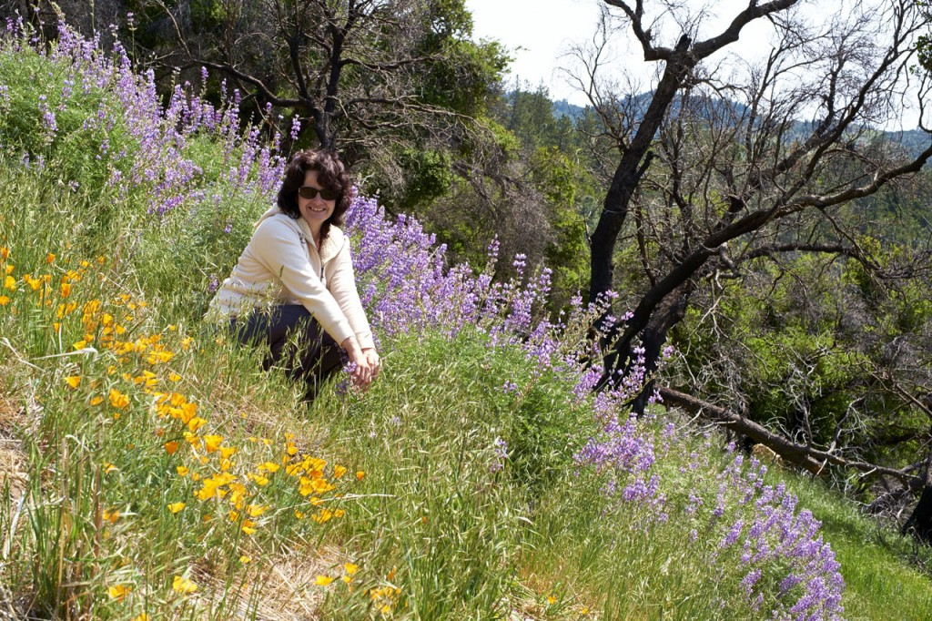 Wildflowers Los Padres National Forrest