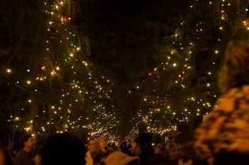 Christmas tree lane, Altadena, CA